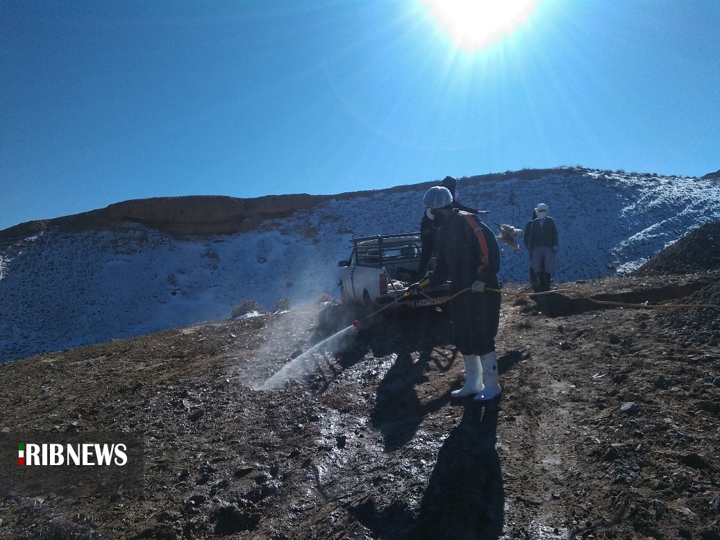 خسارت ۵۰ میلیون تومانی واحد مرغداری در شهرستان درمیان