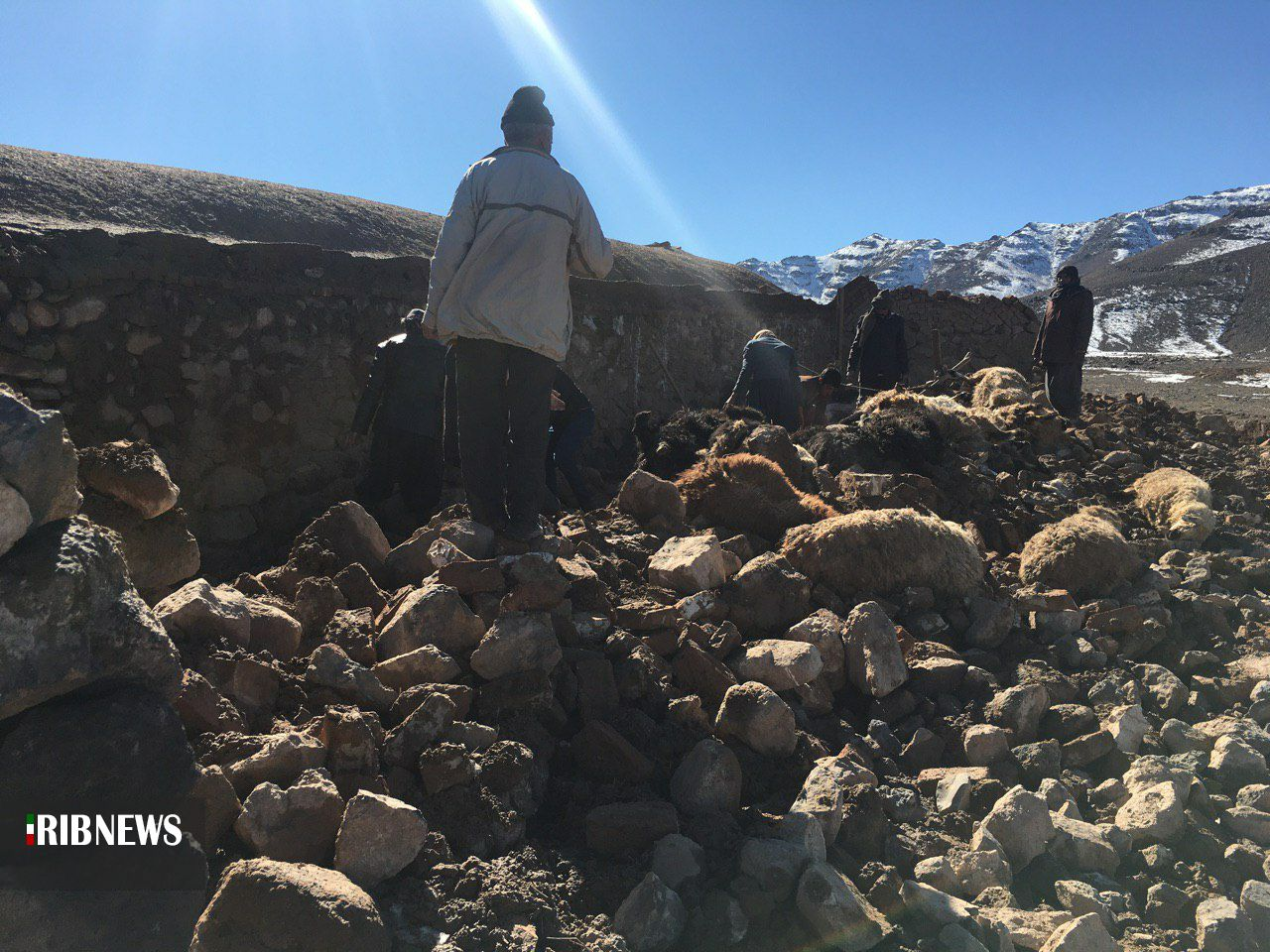 تلف شدن ۲۹۰ رأس دام بر اثر ریزش آوار