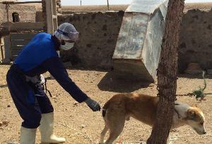 واکسیناسیون بیش از ۶۰۰ قلاده سگ علیه بیماری هاری