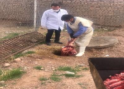 معدوم کردن لاشه یک راس گاو در کشتارگاه دام قاین
