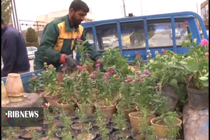 کاشت 10 هزار نوع گل و گیاه در خضری دشت بیاض