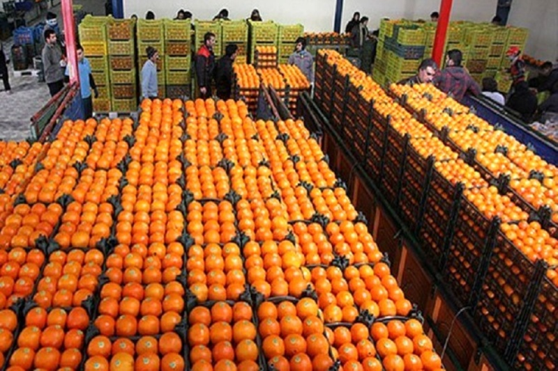 آغاز توزیع 1100 تن میوه تنظیم بازار
