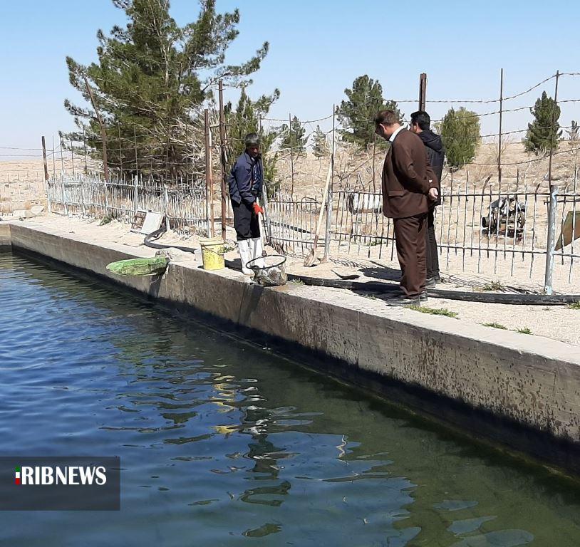 آغاز صید ماهی سردآبی در استخرهای ذخیره آب کشاورزی بشرویه