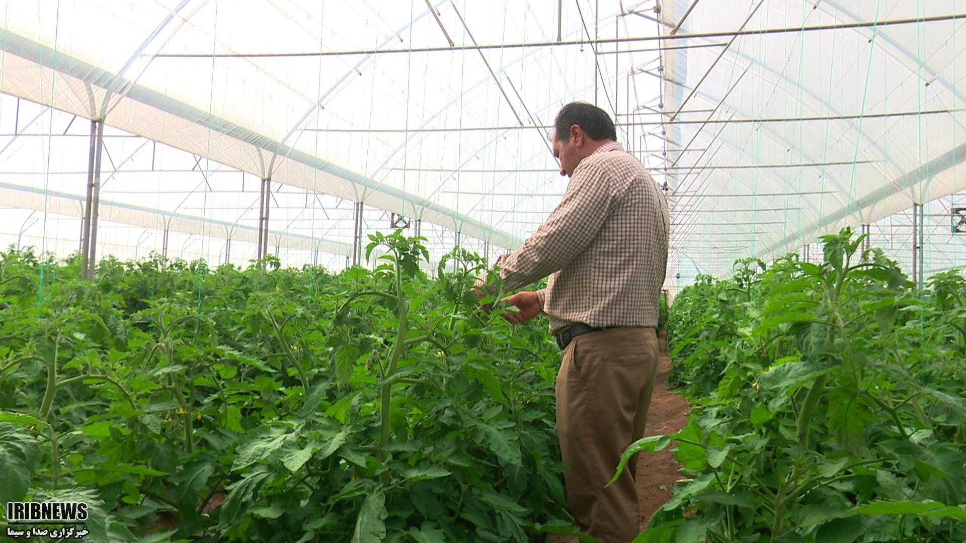 پرداخت تسهیلات به 60 طرح اشتغال کشاورزی در طبس