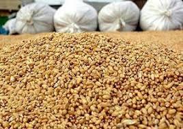 معدوم شدن 2 تن مواد اولیه کارخانجات خوراک دام و طیور در فردوس