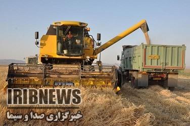آغاز خرید تضمینی گندم از کشاورزان در خراسان جنوبی