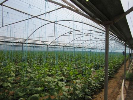 32 واحد گلخانه ای در بزرگترین مجتمع گلخانه ای، آماده واگذاری