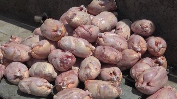 کشف و معدوم سازی هزار و 850 کیلوگرم مرغ منجمد در بیرجند