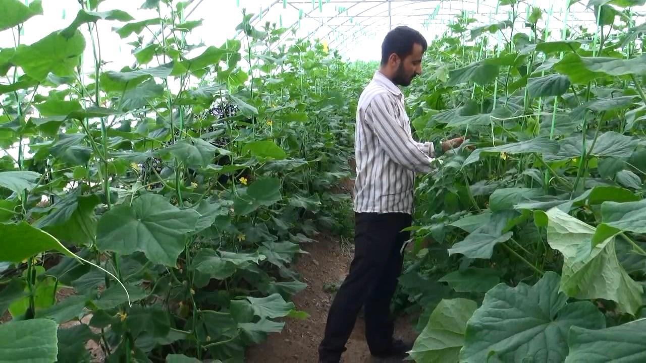 ابلاغ31 میلیارد تومان اعتبار برای تولید و اشتغال در بخش کشاورزی