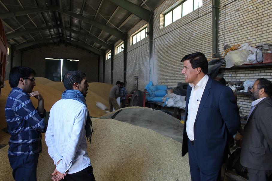 خرید تضمینی 2540 تن گندم از کشاورزان