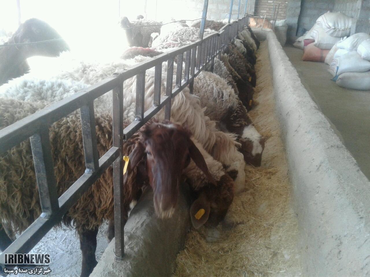 بهره برداری از45 طرح کشاورزی در خوسف
