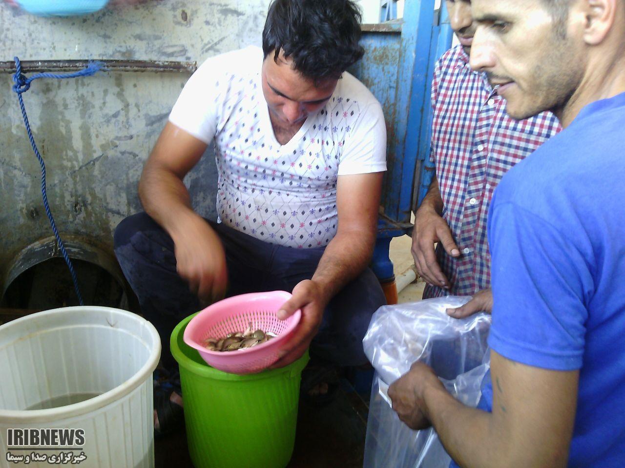 توزیع 20هزار قطعه بچه ماهی در خوسف