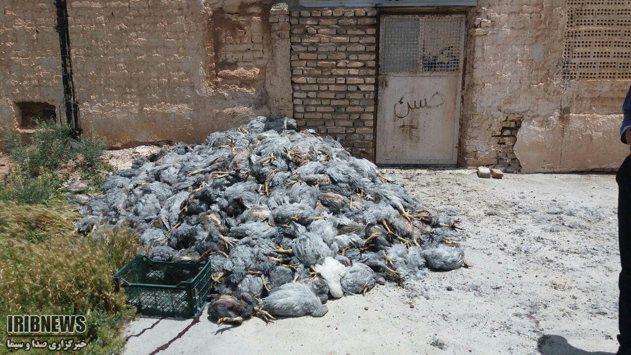 آتش سوزی در مرغداری روستای دوحصاران بخش آیسک
