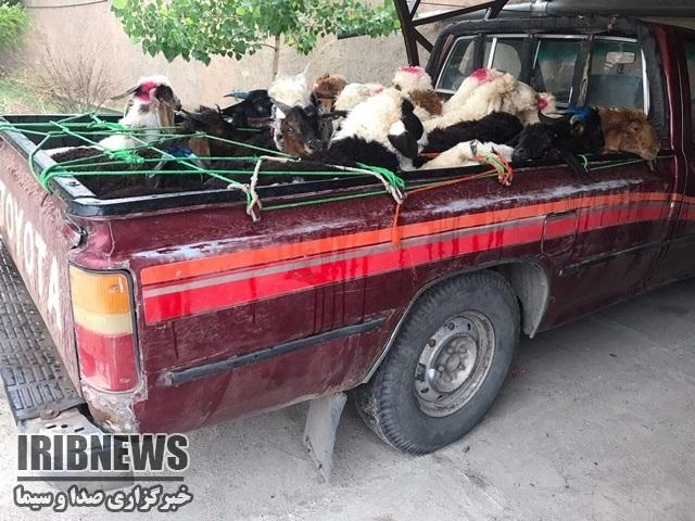 توقیف خودرو حامل 25 راس گوسفند زنده در قاین