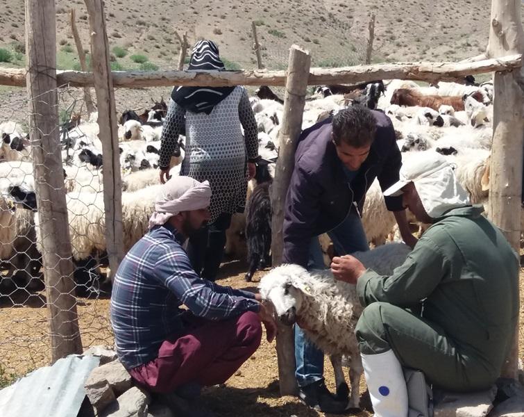 واکسیناسیون بیش از 40 هزار راس دام در مناطق مرزی نهبندان