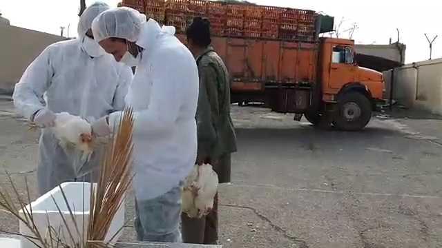 توقیف کامیون حمل مرغ تخمگذار در قاین