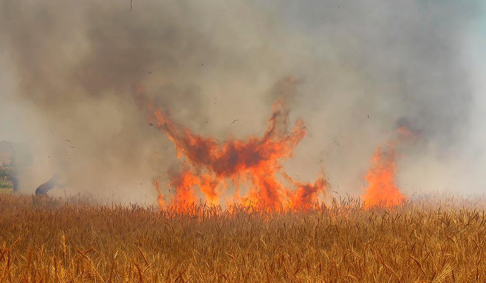 آتش سوزی مزارع گندم روستای نازدشت شهرستان سربیشه مهار شد.