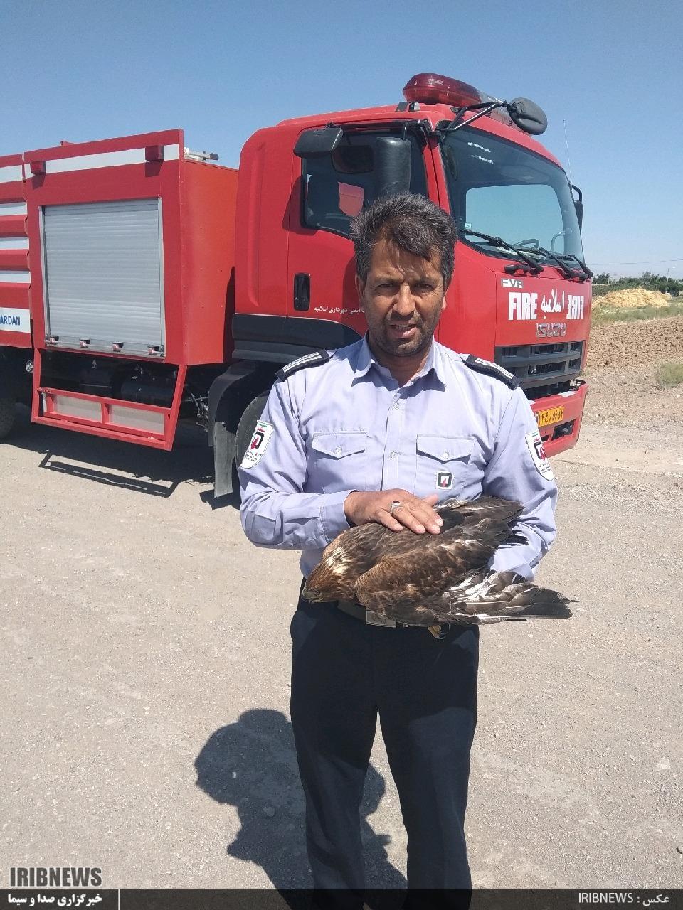 رهاسازی عقاب جوان در طبیعت در باغشهر اسلامیه فردوس