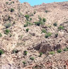 افزایش 18 هزار هکتار به مناطق حفاظت شده خراسان جنوبی