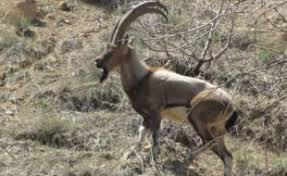 دستگیری 70 شکارچی غیرمجاز درخراسان جنوبی