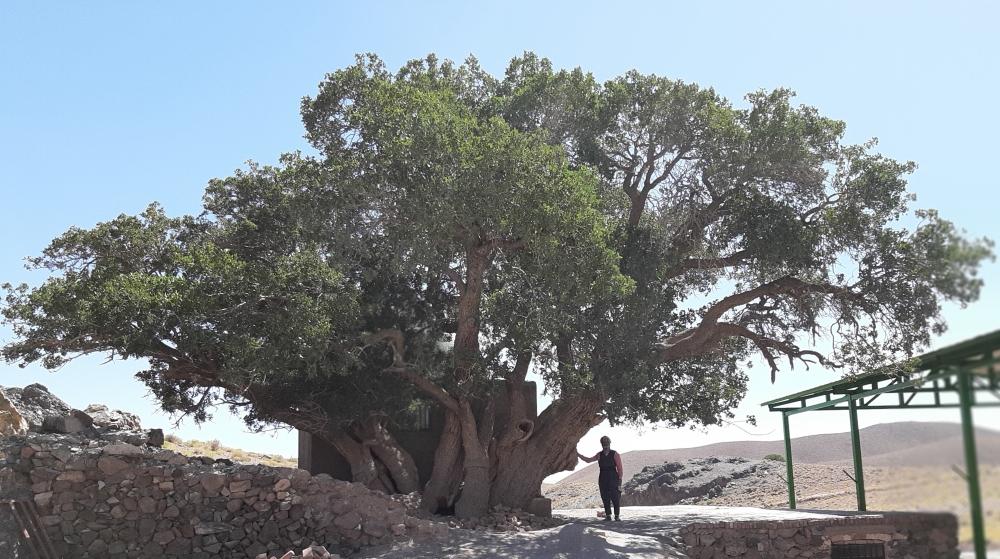 ثبت بنه سبزپوش سربیشه در فهرست میراث طبیعی- ملی