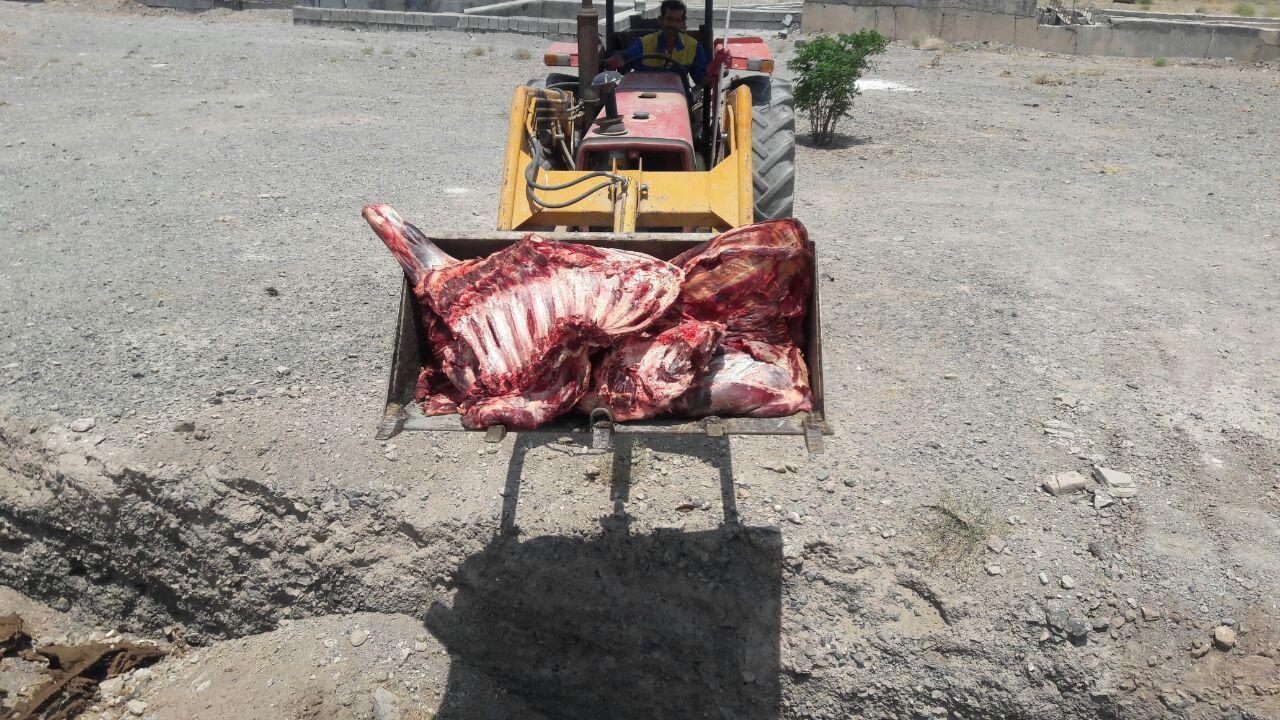 معدوم کردن 125 کیلوگرم گوشت در کشتارگاه دام قاین