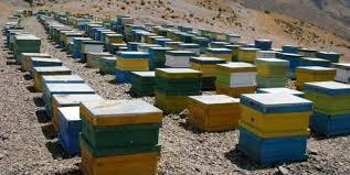 سرشماری زنبورستانهای شهرستان درمیان
