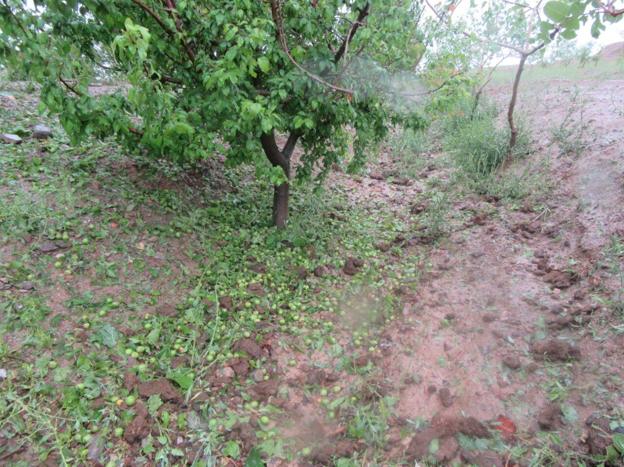 خسارت ۷۶ میلیارد تومانی بارندگی و سیل به بخش کشاورزی