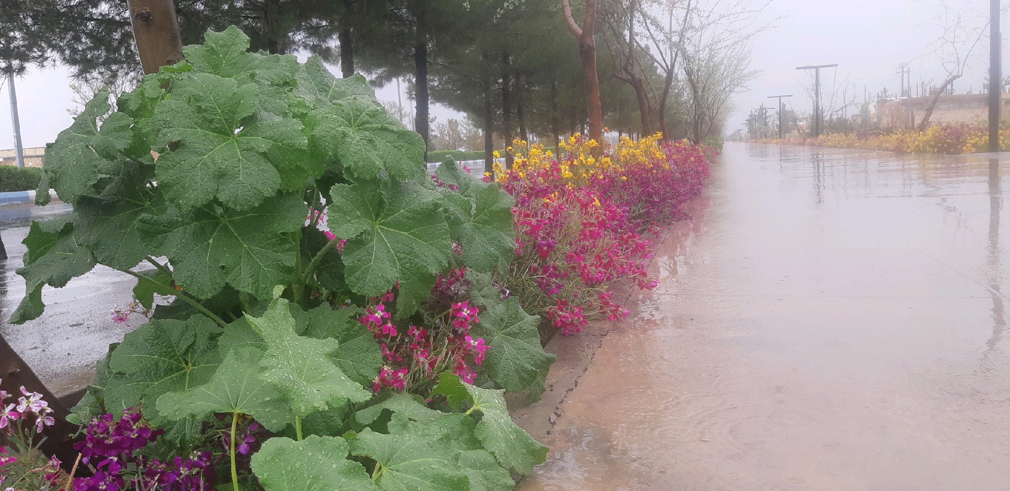 ثبت بیشترین بارش بهاری در کلشانه طبس
