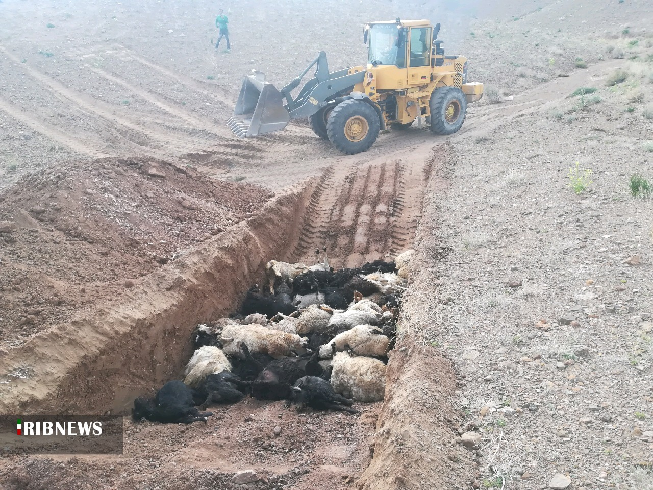 تلفات ۵۱ راس دام بر اثر برخورد صاعقه در شهرستان بیرجند