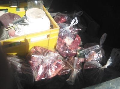 شناسایی کشتار غیر مجاز شترمرغ در شهرستان خوسف