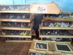 کشف ۱۰۰ قطعه پرنده کمیاب از اتوبوس