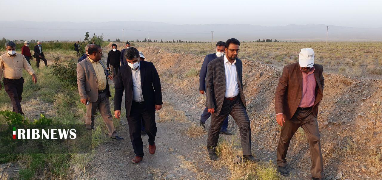 آلودگی ۶۰ هزار هکتار از اراضی کشاورزی به ملخ صحرایی