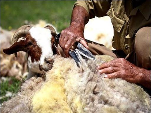 کاهش 50 درصدی تولیدات عشایر خراسان جنوبی